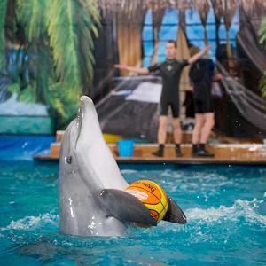 Дельфинарии, океанариумы Рублево