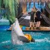 Дельфинарии, океанариумы в Рублево
