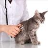 Ветеринарные клиники в Рублево